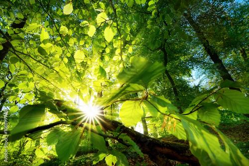 Photo  Sonnenstrahlen leuchten effektvoll durch Blätter