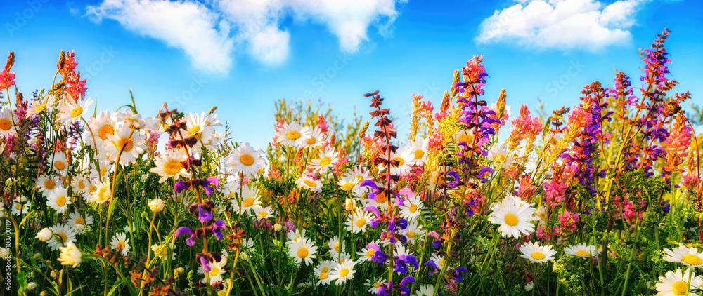 Fototapety, obrazy: Dichte wachsende Blumen auf einer Wiese und blauer Himmel