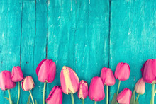 Frame Of Tulips On Turquoise R...