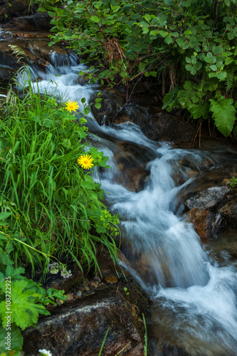 Photo Stands South America Country Mountain forest stream