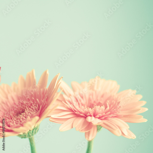 Wallpaper Mural Pink flowers over mint background