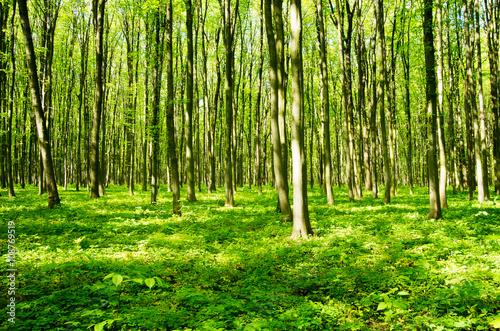 Poster Bossen forest green