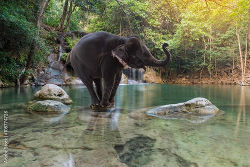 Poster Kaki Erawan Waterfall with elephant