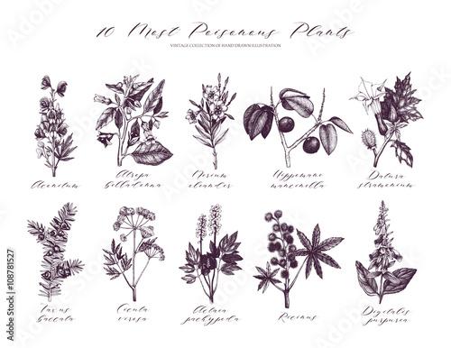 Vector Most Poisonous Plants Collection Canvas Print