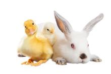 Rabbit Chicken Duck
