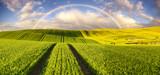 Wielobarwna tęcza nad wiosennym polem