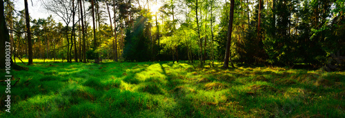 Fototapeten Wald Panoramic view of forest at sunset