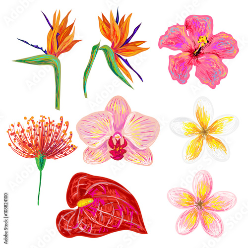 Exotic Tropical Flowers Collection Set Of Hand Drawn Tropical