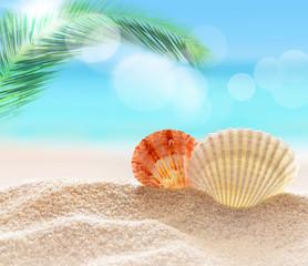 Fototapeta seashell on the sandy beach