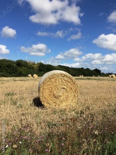 Fotografia, Obraz  Meule de foin dans un champs