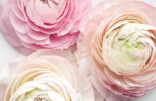 Fresh Spring Pink Flowers On W...