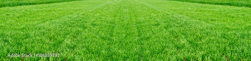 Foto op Aluminium Weide, Moeras The field of young wheat. Background green grass.