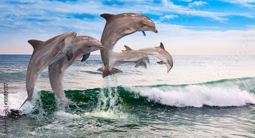 Photo  six dolphins jumps ocean