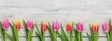 Fototapeta Tulipany -  Tulpen auf weißem  Holzhintergrund mit Textfreiraum