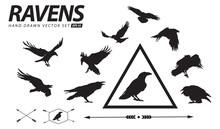 Hand Drawn Ravens Vector Set