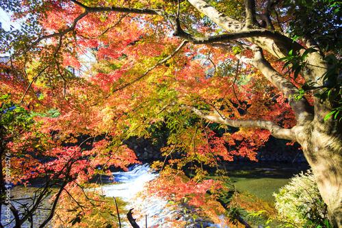 Poster Jardin Autumn Colors in Japan, Beautiful autumn leaves