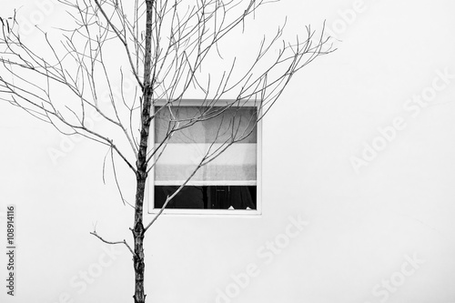 Fotografie, Obraz  Minimalist abstract, dry branches with window