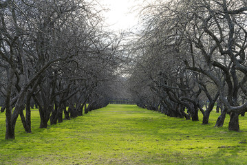 Trees in a row.