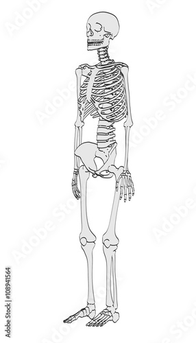 2d cartoon illustration of human skeleton - Buy this stock