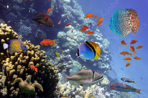 Láminas  Coral Reef and Tropical Fish in the Red Sea, Egypt