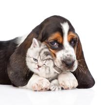 Basset Hound Puppy Embracing T...