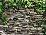 Fototapeta Rocks - climbing plant on the old stone wall