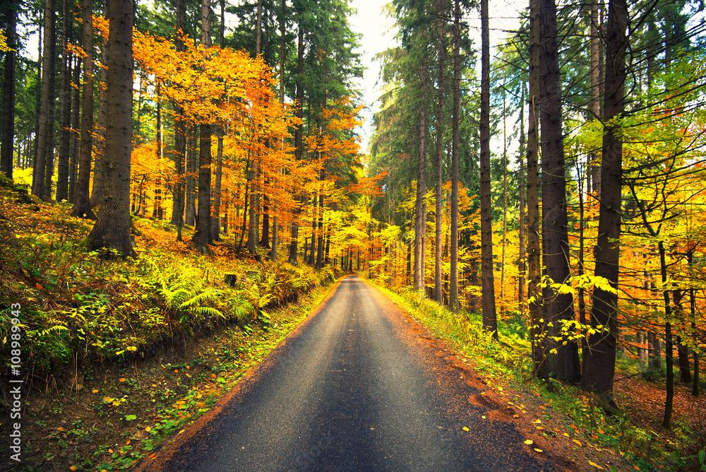 Valokuva  autumn