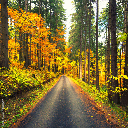 autumn Canvas-taulu