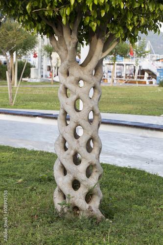 Photo  Beautiful Tree