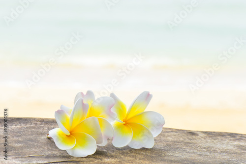 Wall Murals Plumeria Frangipani tropical flowers with beach background
