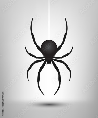 Photo  Black spider isolated