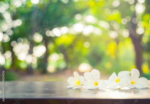 Poster Frangipani Beautiful white plumeria flower on wood table