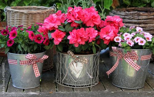 Plakat Flowerpots z petunią i azalią na drewnianym stole