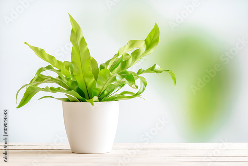 Photo Green plant in a white flowerpot
