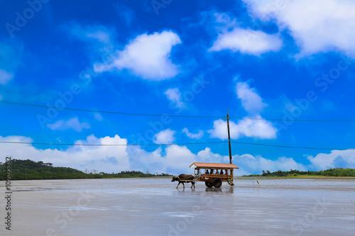 Staande foto Buffel 沖縄 水牛車