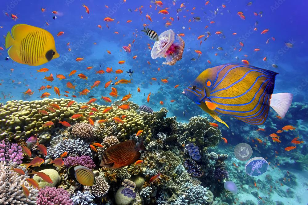 Láminas  Arrecifes de coral y peces tropicales en el Mar Rojo