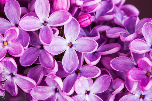 Fotobehang Lilac Macro image of spring lilac violet flowers, abstract soft floral background