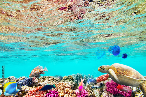 Poster Turquoise Wonderful and beautiful underwater world with corals and tropica