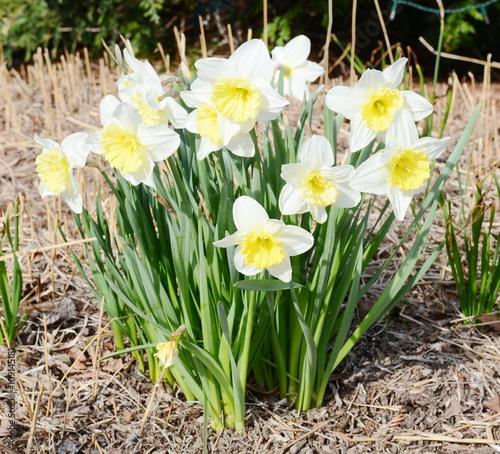 Fototapety, obrazy: Narcissus