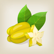 Star Fruit ( Carambola ). Vector Illustration.
