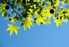 Spring Background Of Fresh Green Leaves