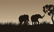 African elephant walking of silhouette
