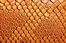 Brown Snake Skin, Can Use As Background