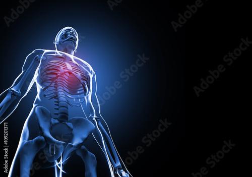 Male Rib Cage 3d Illustration Of Anatomy Bones Buy This Stock