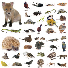European Wildlife In Studio