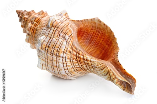 Fotografia sea shell isolated on white