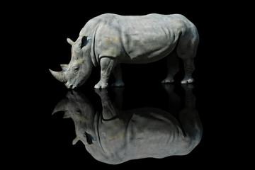 Nosorożec z pochylonym łbem na czarnym tle z efektem odbicia czarnej pleksy
