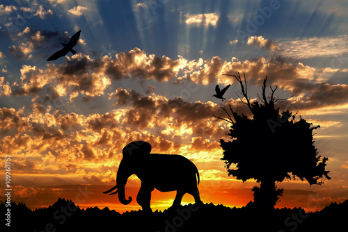 Foto auf AluDibond Ziehen Jungle with old tree, birds and elephant on golden cloudy sunset background