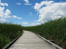 Point Pelee Boardwalk Through ...