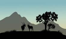 Silhouette Of Antelope In Hills